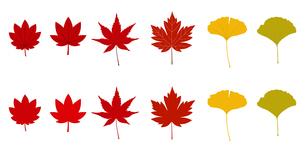 秋の紅葉のアイコンのイラスト素材 [FYI01265030]