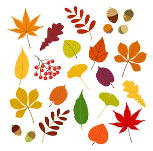 秋の紅葉とどんぐりなどのアイコンのイラスト素材 [FYI01265034]