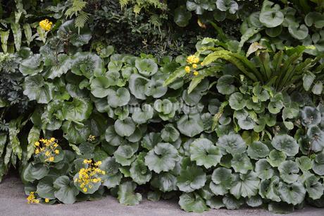 南国の観葉植物が壁一面に植えられているの写真素材 [FYI01265062]