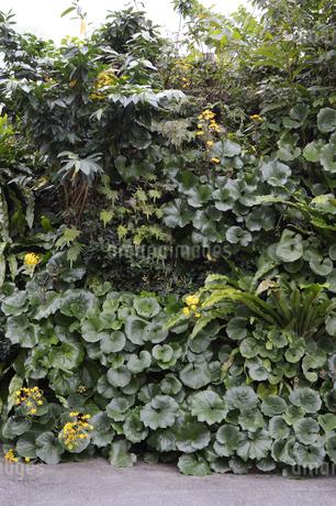 南国の観葉植物が壁一面に植えられているの写真素材 [FYI01265063]
