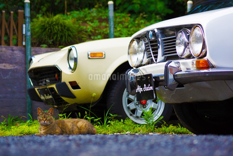 自動車とネコの写真素材 [FYI01265107]