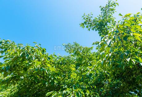 新緑の写真素材 [FYI01265483]