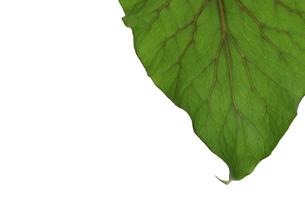 葉の写真素材 [FYI01265576]
