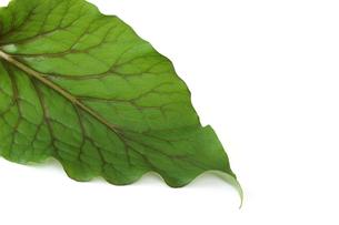 葉の写真素材 [FYI01265579]