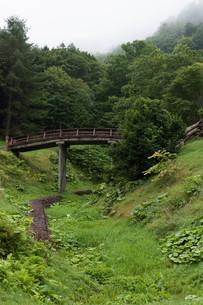 緑の谷にかかる木造の橋の写真素材 [FYI01265602]