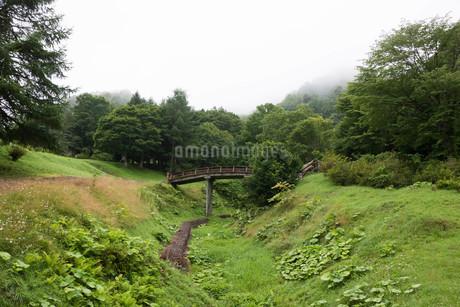 緑の谷にかかる木造の橋の写真素材 [FYI01265603]