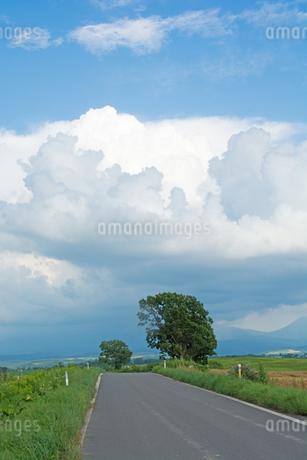 農村の道路と夏の空 美瑛町の写真素材 [FYI01265615]