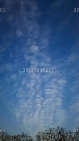 林の上を流れる白い雲の写真素材 [FYI01265839]