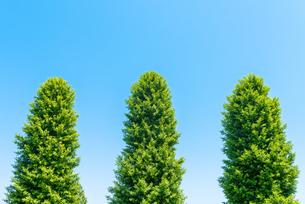 木の写真素材 [FYI01265981]