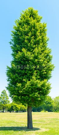 木の写真素材 [FYI01265982]