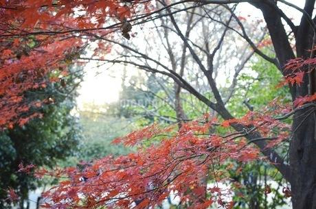 紅葉3の写真素材 [FYI01265986]