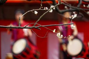 梅と和太鼓の写真素材 [FYI01266080]