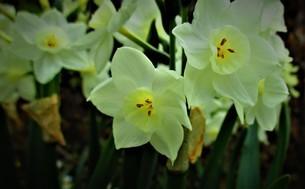 春に咲く花の写真素材 [FYI01266159]