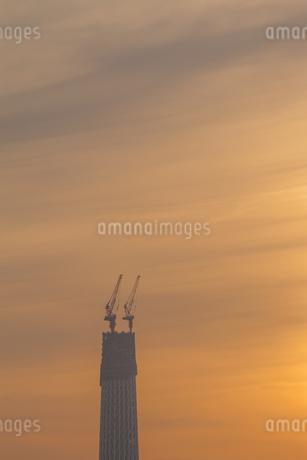 東京スカイツリー(建設中)の写真素材 [FYI01266223]