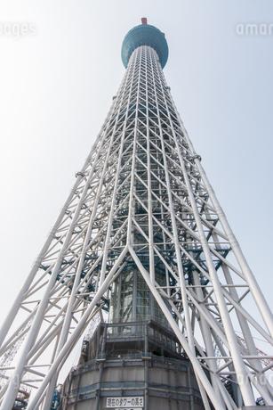 東京スカイツリー(建設中)の写真素材 [FYI01266242]