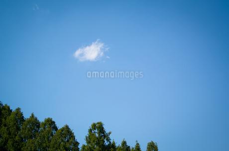 林の上に浮かぶ白い雲の写真素材 [FYI01266360]
