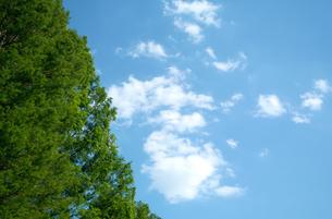 青空に浮かぶ白い雲と新緑の木の写真素材 [FYI01266362]