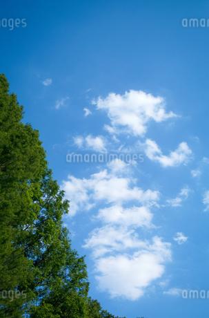 青空に浮かぶ白い雲と新緑の木の写真素材 [FYI01266363]