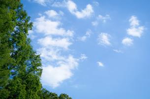 青空に浮かぶ白い雲と新緑の木の写真素材 [FYI01266364]