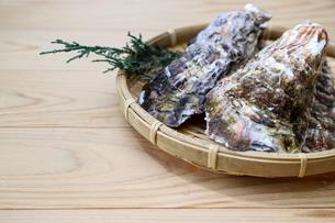 牡蠣の写真素材 [FYI01266409]
