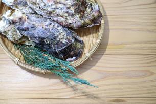 牡蠣の写真素材 [FYI01266410]
