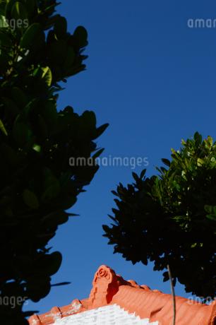 晴天の空に沖縄の瓦屋根とフクギの写真素材 [FYI01266495]
