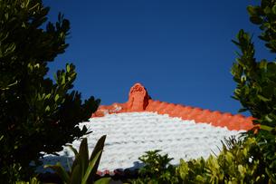 晴天の空に沖縄の瓦屋根とフクギの写真素材 [FYI01266496]