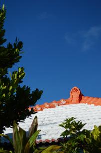晴天の空に沖縄の瓦屋根とフクギの写真素材 [FYI01266497]