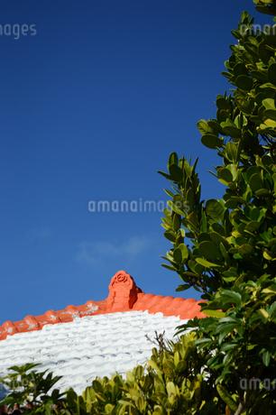 晴天の空に沖縄の瓦屋根とフクギの写真素材 [FYI01266498]