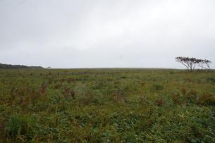 霧多布の風景 の写真素材 [FYI01266504]