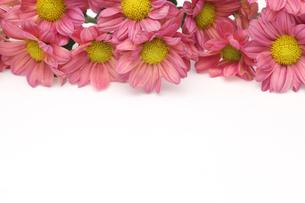 菊の花束の写真素材 [FYI01266560]