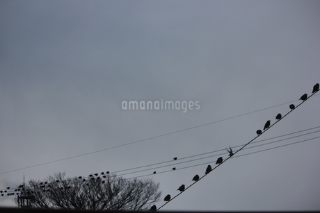 電線小鳥音符の写真素材 [FYI01266664]