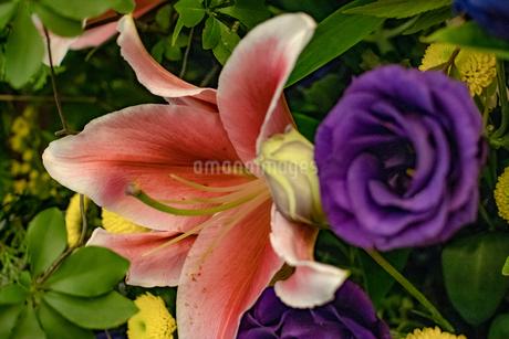 花束の写真素材 [FYI01266705]