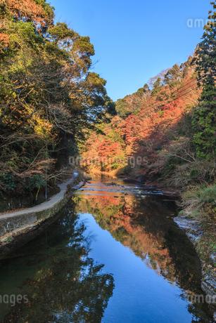 秋の養老渓谷の中瀬遊歩道の共栄橋から見た風景の写真素材 [FYI01266752]