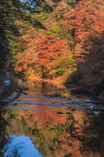 秋の養老渓谷の中瀬遊歩道の共栄橋から見た風景の写真素材 [FYI01266753]