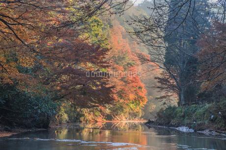 秋の養老渓谷の中瀬遊歩道から見た風景の写真素材 [FYI01266757]