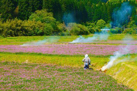 春の畑イメージの写真素材 [FYI01266805]