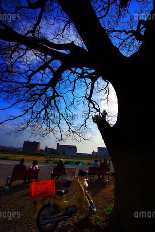 大木のシルエットの写真素材 [FYI01266820]