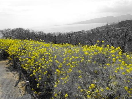 葉の花畑の写真素材 [FYI01266894]