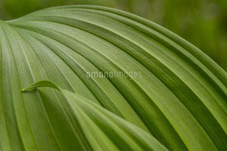 葉のクローズアップの写真素材 [FYI01266896]