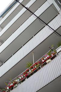 一か所だけベランダに花いっぱいのマンションの写真素材 [FYI01266942]