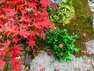 苔と紅葉の写真素材 [FYI01266979]