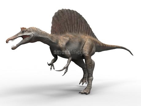 スピノサウルスのイラスト素材 [FYI01267099]