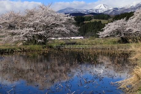 桜と山形新幹線の写真素材 [FYI01267209]