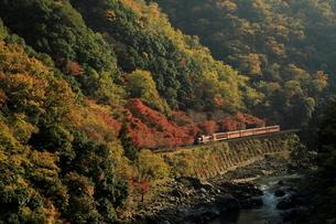 紅葉と嵯峨野観光鉄道の写真素材 [FYI01267232]