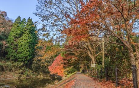 秋の養老渓谷の中瀬遊歩道からみた風景の写真素材 [FYI01267243]