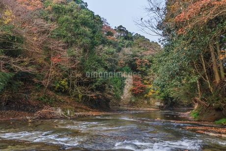秋の養老渓谷の中瀬遊歩道からみた風景の写真素材 [FYI01267250]