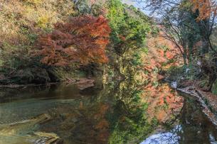 秋の養老渓谷の中瀬遊歩道からみた風景の写真素材 [FYI01267279]
