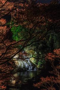 秋のライトアップされた粟又の滝の風景の写真素材 [FYI01267298]
