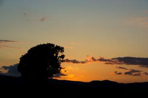 夕暮れの空と大きな木のシルエット 美瑛町の写真素材 [FYI01267324]